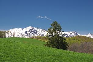 春よ来いの一本の木と夕張山地の写真素材 [FYI04565648]