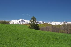 春よ来いの一本の木と夕張山地の写真素材 [FYI04565649]