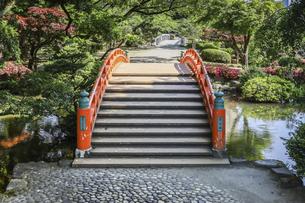 富山城址公園内にかかる朱塗りの太鼓橋の写真素材 [FYI04565847]