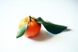 正月飾り・葉つきみかんの写真素材 [FYI04565902]