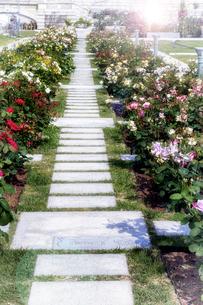 花の道と光の写真素材 [FYI04565965]