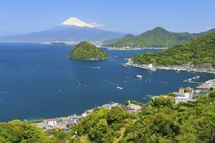 静岡県 新緑の伊豆半島発端丈山からの眺めの写真素材 [FYI04565982]