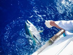 沖縄県の久米島 パヤオでキハダマグロ釣りの写真素材 [FYI04566157]