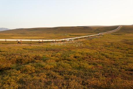 アラスカ州、夕陽に染まる草原とパイプラインの写真素材 [FYI04566176]