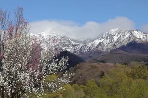 残雪残る山並みと満開の桃の花の写真素材 [FYI04566311]