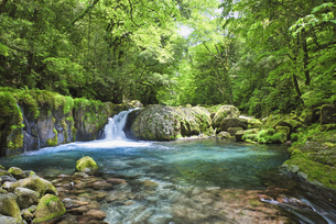 新緑の菊池渓谷 黎明の滝の写真素材 [FYI04566958]