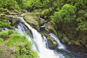 新緑の菊池渓谷 天狗滝の写真素材 [FYI04566967]