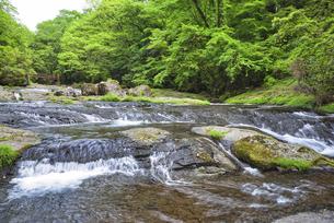 新緑の菊池渓谷 広河原の写真素材 [FYI04566972]
