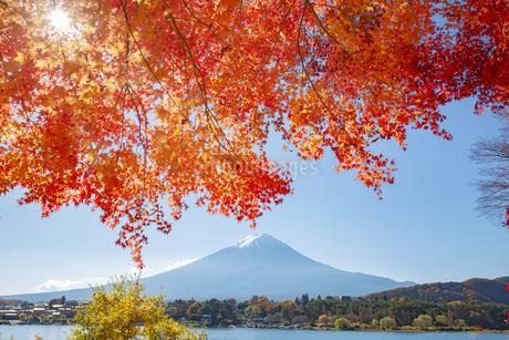 富士山と紅葉の写真素材 [FYI04567307]