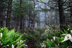 霧の森の写真素材 [FYI04567334]