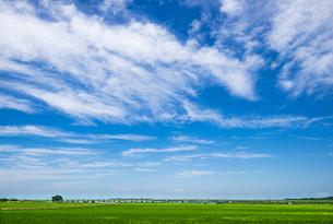 関東平野と青田に筋雲の空の写真素材 [FYI04567515]