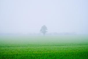 霧の畑の写真素材 [FYI04567837]