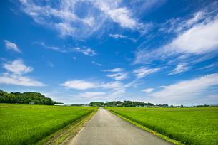 関東平野青田の一本の農道と青空に筋雲の写真素材 [FYI04567996]