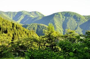 新緑の頃の奥多摩山地の写真素材 [FYI04568026]