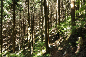 森の斜光の写真素材 [FYI04568030]