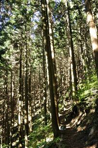 森の斜光の写真素材 [FYI04568031]