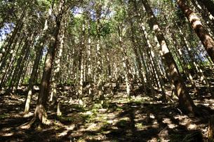 森の斜光の写真素材 [FYI04568033]