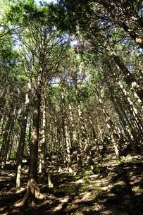 森の斜光の写真素材 [FYI04568034]