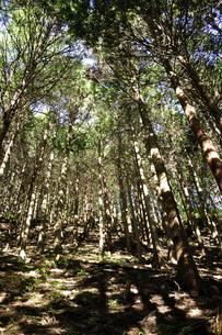 森の斜光の写真素材 [FYI04568036]