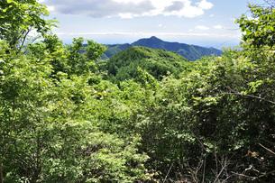 御前山より大岳を望むの写真素材 [FYI04568067]