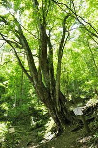 新緑の奥多摩都民の森の写真素材 [FYI04568073]