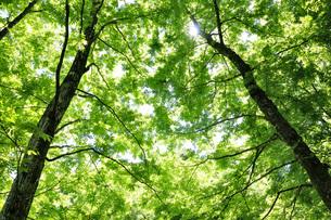 新緑の奥多摩都民の森の写真素材 [FYI04568074]