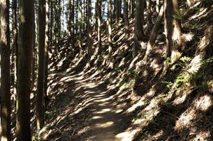 山道に点在する陽射しの写真素材 [FYI04568711]