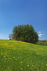 もうひとつのマイルドセブンの丘とタンポポの写真素材 [FYI04568815]