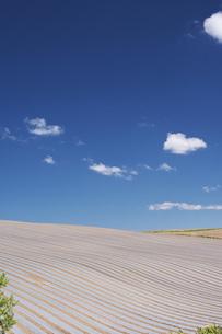 農地とマルチシートの写真素材 [FYI04568819]