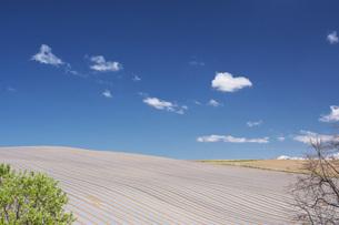 農地とマルチシートの写真素材 [FYI04568821]