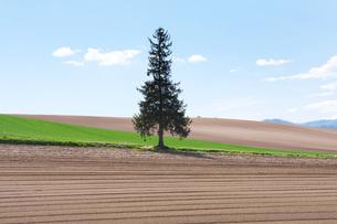 クリスマスツリーの木の写真素材 [FYI04568823]