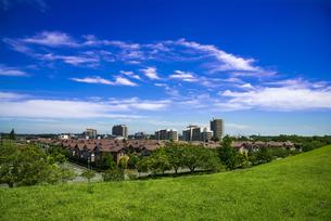 印西牧の原公園より新興住宅地牧の原の家並みと青空に筋雲の写真素材 [FYI04568877]