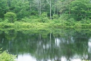 初夏の一ノ瀬・湖の写真素材 [FYI04568921]