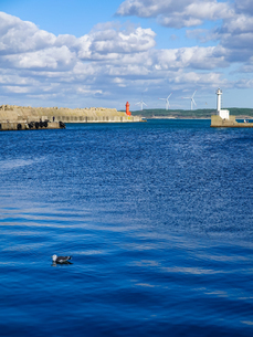 ウミネコの泳ぐ鰺ヶ沢港から灯台と風力発電所 津軽の海 日本海の写真素材 [FYI04569092]