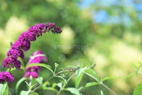 赤紫の花が有る花壇の写真素材 [FYI04569232]