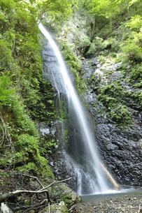小菅村 白糸の滝の写真素材 [FYI04569252]