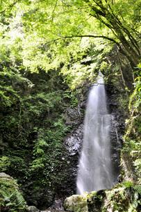 日本の滝百選 払沢の滝の写真素材 [FYI04569267]