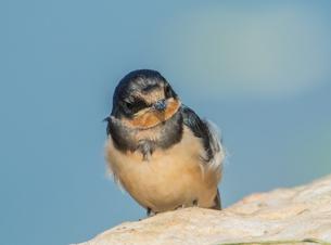 岩に立つ小鳥の写真素材 [FYI04569615]