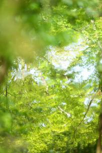 水面に映る新緑の写真素材 [FYI04570064]
