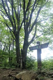 奥武蔵 棒ノ折山の権次入峠 関東ふれあいの道の写真素材 [FYI04570156]