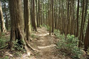 奥武蔵 滝ノ平尾根の登山道の写真素材 [FYI04570181]