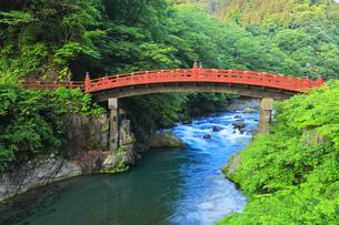 日光二荒山神社 神橋の写真素材 [FYI04570204]