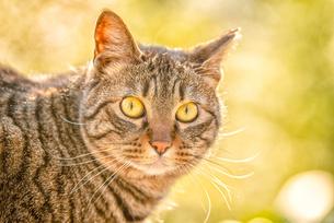 野良猫 Homeless Cat の写真素材 [FYI04570357]