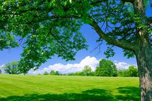 夏の風景の写真素材 [FYI04570394]