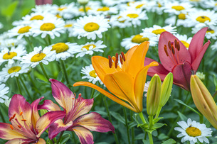花園の写真素材 [FYI04570423]