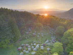 穴平のツツジと朝日に輝く田園と浅間山遠望の写真素材 [FYI04570469]