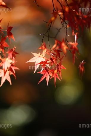 秋彩の写真素材 [FYI04570728]