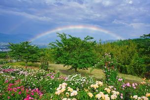信州国際音楽村のバラ園と夕方のダブルレインボーの写真素材 [FYI04570739]