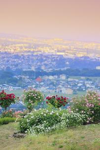 信州国際音楽村のバラ園と夕方の東御市方向の町並みの写真素材 [FYI04570740]
