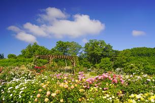信州国際音楽村のバラ園とわた雲の写真素材 [FYI04570762]